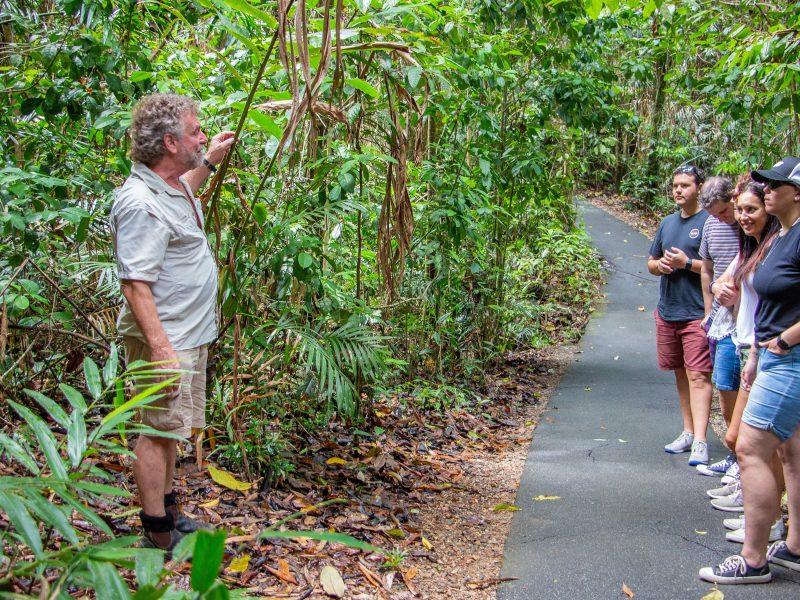 rainforest walk on wooroonooran safaris