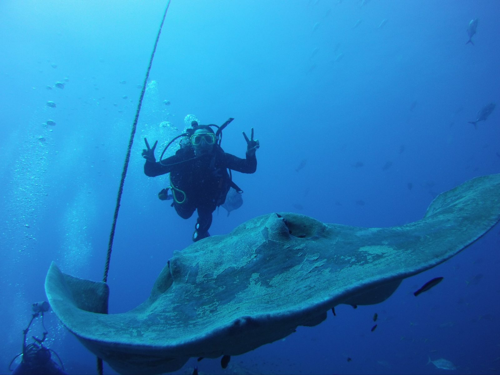 Giant Rays are regular visitors