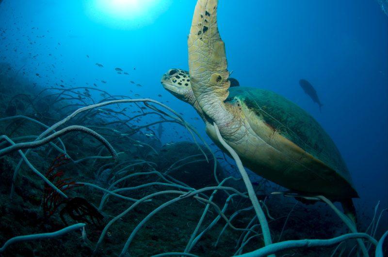 Unimaginable Marine Life