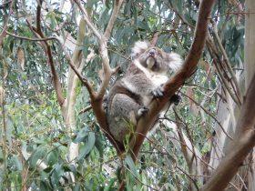 4WD Aussie Swagabout Tours - Kangaroo Island