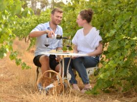 Enjoy a glass of wine in the vineyard