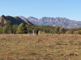 Aboriginal Cultural 4WD Tour - Wilpena Pound Resort