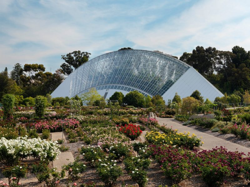 Adelaide Botanic Garden's Bicentennial Conservatory is home to several endangered rainforest plants.