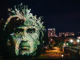 A man's face projected onto the foliage of a tree at night.