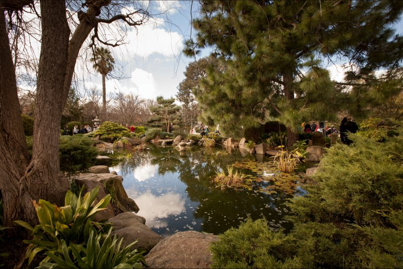 Tranquil, peace, garden, walk, Japanese, Sister City, water, pond