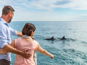 Couple viewing wild dolphins