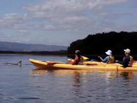 Adventure Kayaking SA-Adelaide Dolphin Sanctuary