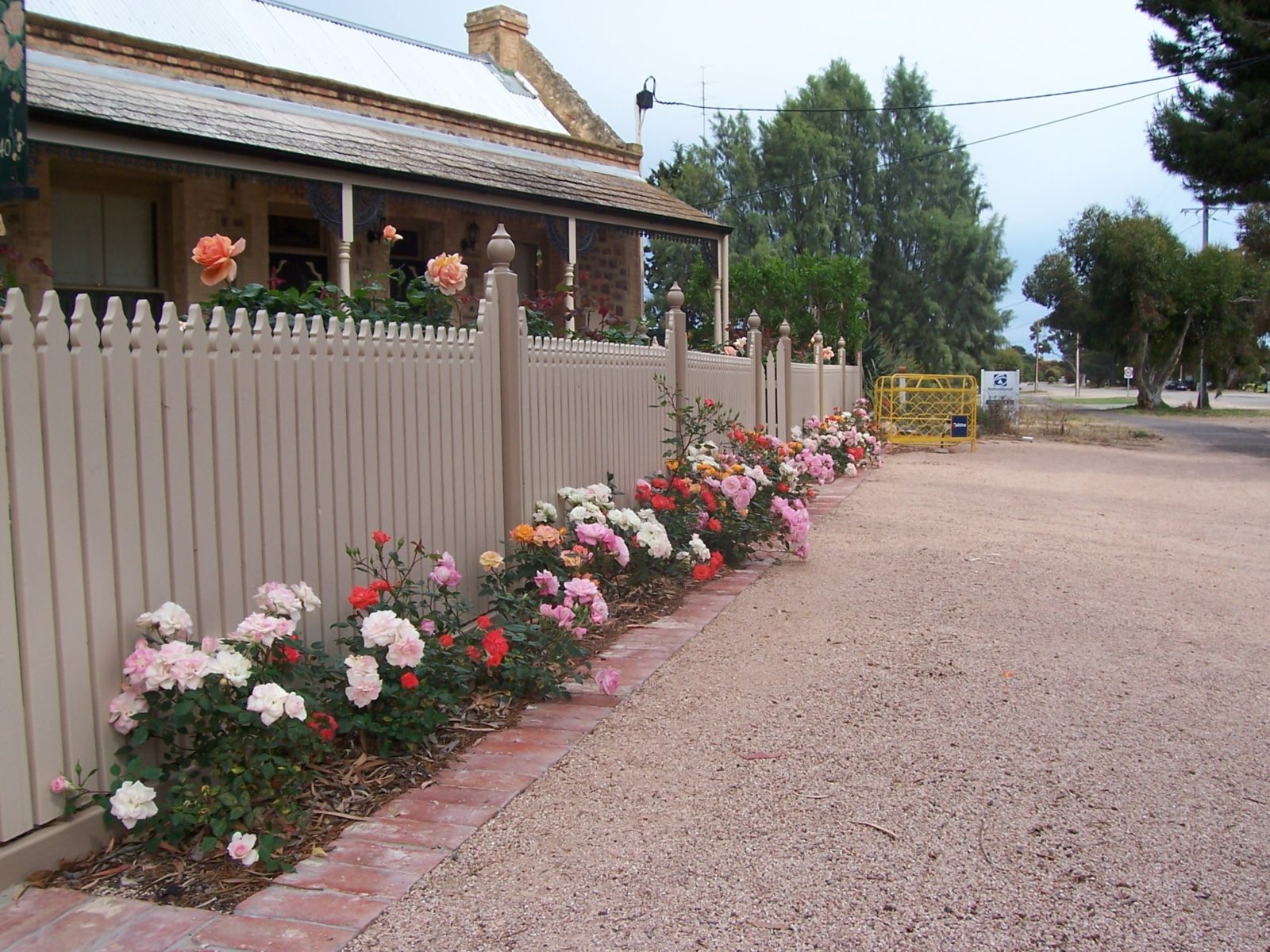 Our front fence gardn