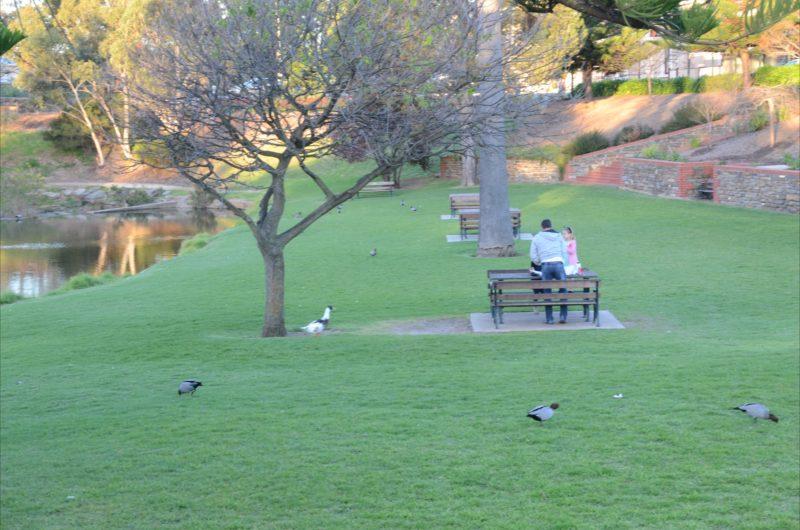 Feed ducks on banks of Angas River Strathalbyn