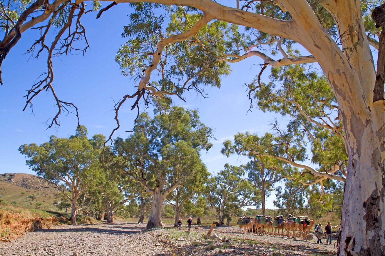 Heysen Trail and Flinders Ranges
