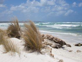 Bales Beach