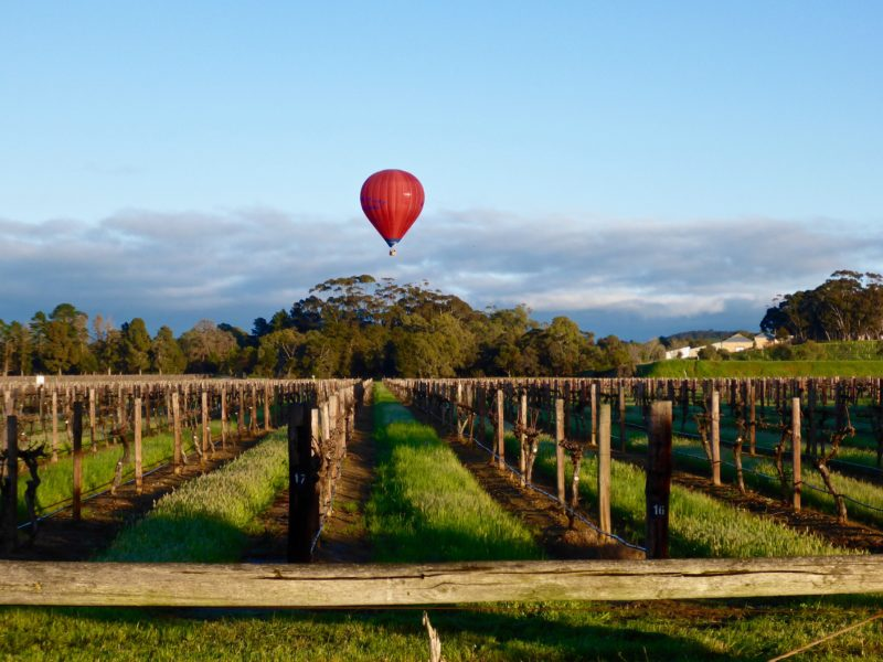 Low over the vines in a hot air balloon in the Barossa