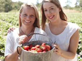 Pick your own strawberries at Beerenberg