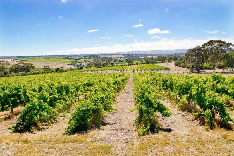 Bekkers Vines