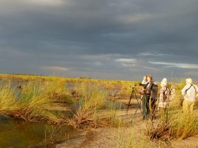 Birdwatching tour with Bellbird Tours