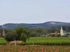 Barossa Valley Touring