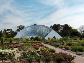 The Bicentennial Conservatory is the largest single-span glasshouse in the Southern Hemisphere.