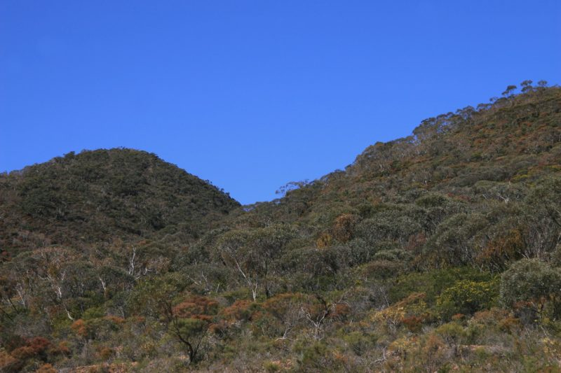 black hill conservation park