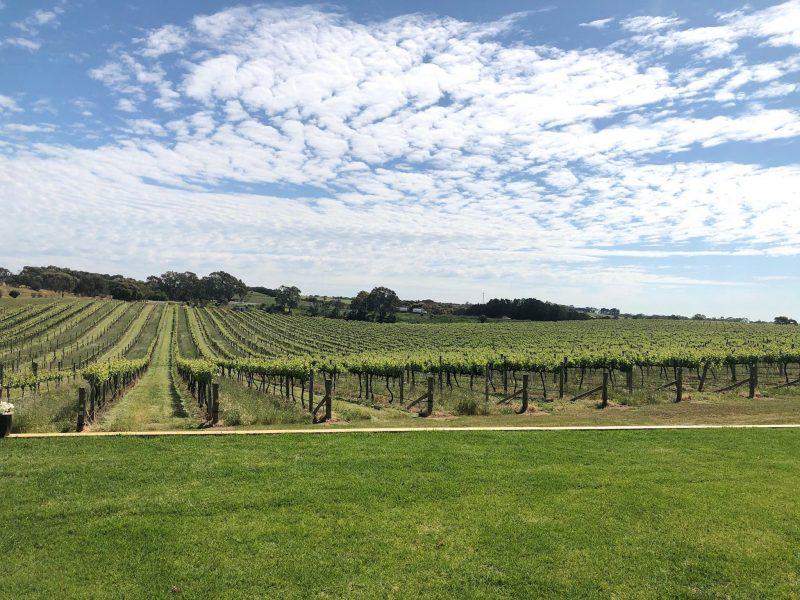 Hackett Wine, SA