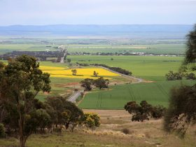 Blyth Plains in Spring
