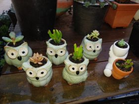 Owls Pots