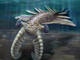Anomalocaris reconstruction