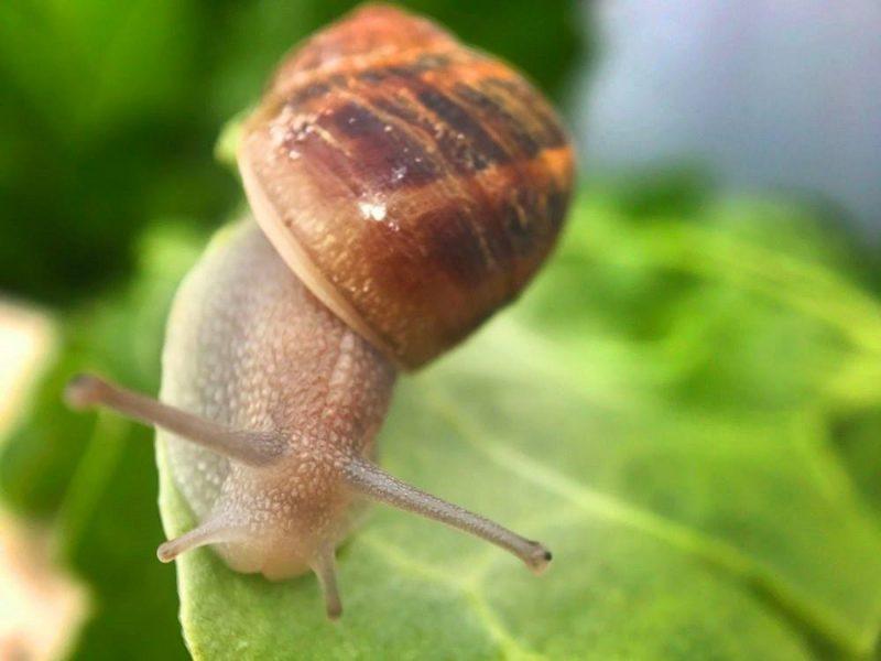 Jimmy the snail