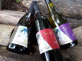 Caroline Hills wines