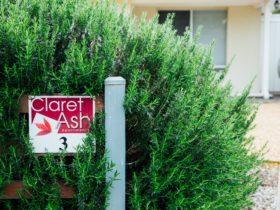 Outside Claret Ash