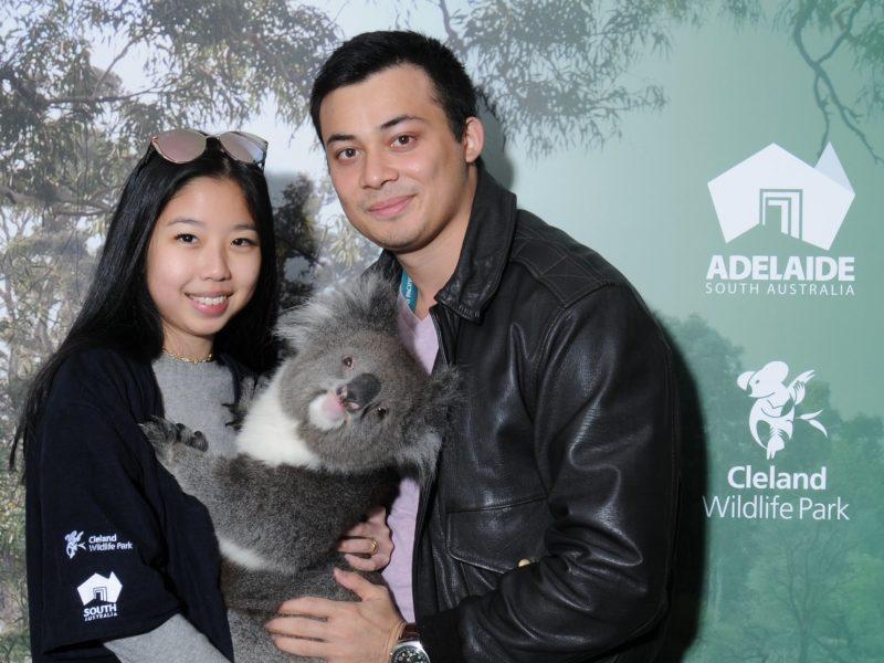 koala hold