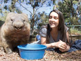 Wombat experience