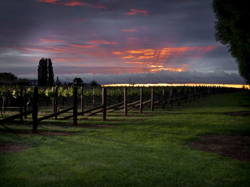 Coonawarra Vineyard on Dusk