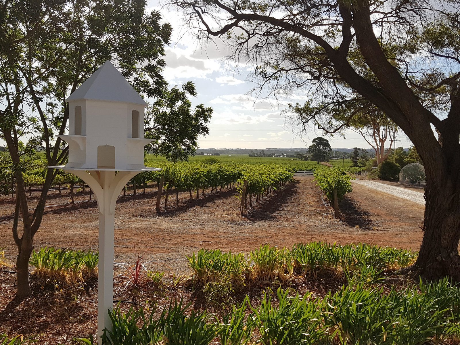 View over the vines from the cottage