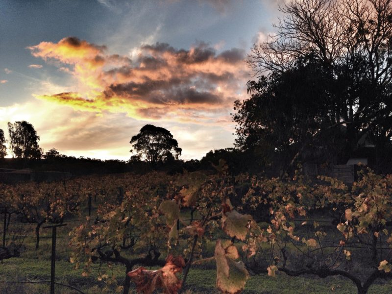 Sunset over the Crabtree Vineyards