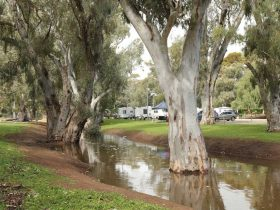 Gum trees lining the Crystal Brook with caravans in the background