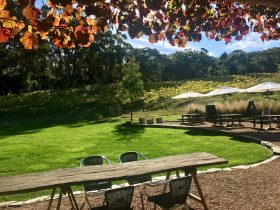 Autumn at our Cellar Door