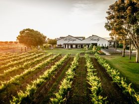 The winery and cellar door right in the heart of Coonawarra