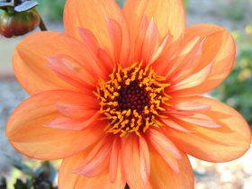 Lovely orange flower