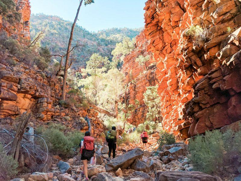 Hiking through beautiful South Australian bushland