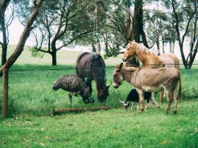 Collection of Animals at Echo Farm, Mount Gambier