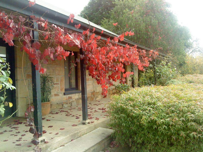 Ethel's Cottage front verandah with autumn glory vine