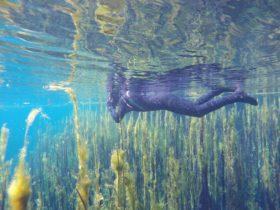 Ponds snorkeller