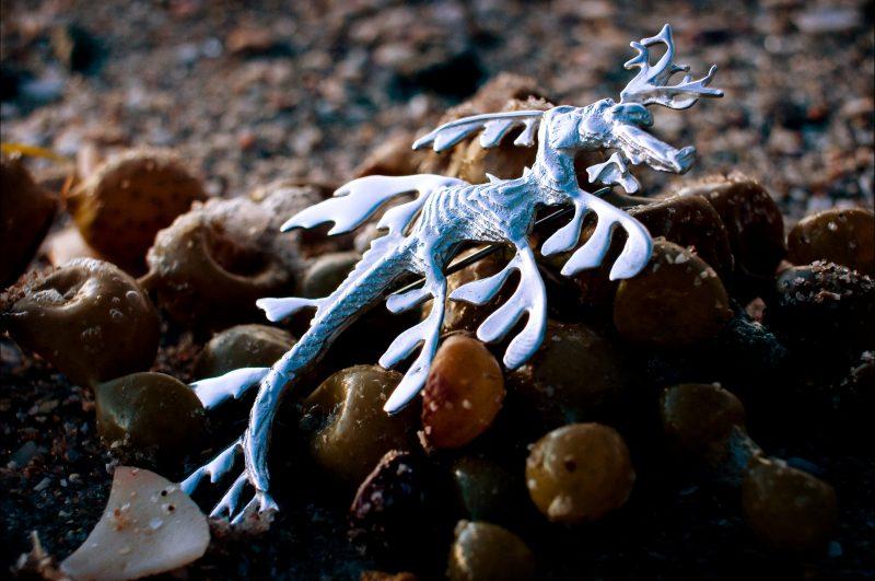 Iconic South Australian marine emblem leafy sea dragon, cuttlefish cast silver jewellery