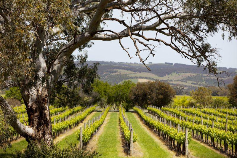 Fox Creek Wines, Willunga, Fleurieu Peninsula, South Australia