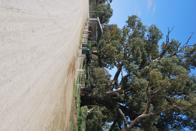 This is the Giant gum Tree and the picnic area