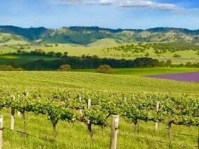 Gods Hill Wines