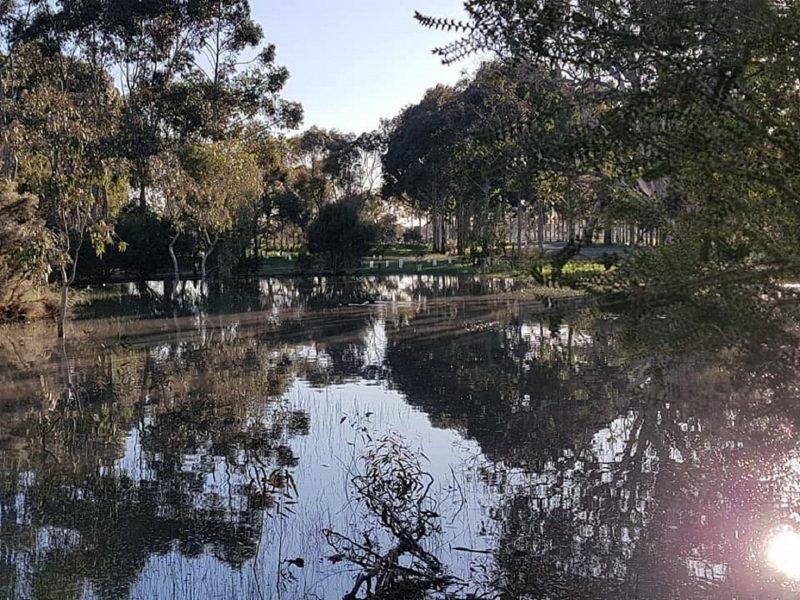 Greenrise Arboretum in Winter