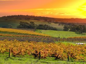 Picturesque Barossa wine country