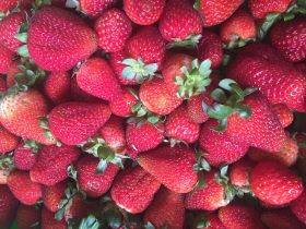 Delicious Albion stawberries