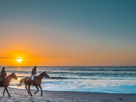 Horse riding on the beach south australia